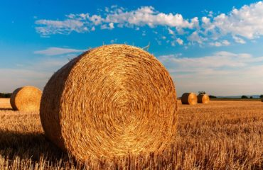 Hay in field
