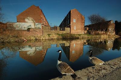 Geese staring at mural of fish