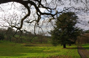 Northern Irish countryside