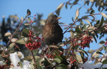 Bird in bush (V Gravey)
