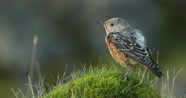 Currently protected by the EU's Habitats Directive. Sandra Standbridge/Shutterstock